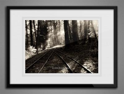 Washington Park Rail